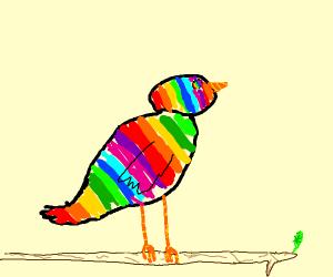 Rainbow butterbird