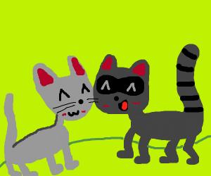 Cat snuggles with a raccoon UwU