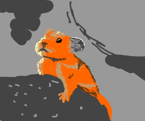 A Cute Rodent in a cave