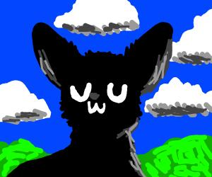 black cat uwu
