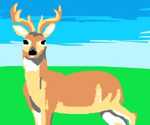 Anatomy of a buck