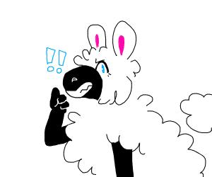 Sheep giving thumbs up