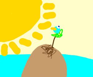 Bluebird on tropical island