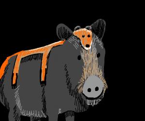 boar wearing a fox pelt