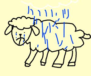 a depressed sheep in rain