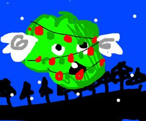 flying christmas bush
