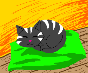 cat with white strips sleeps on green cussion