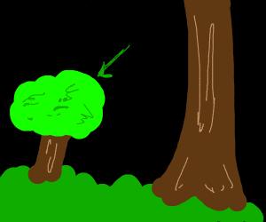 Short fat tree in grass