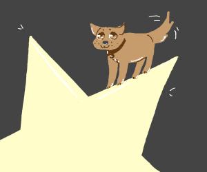 doggo with a star :o