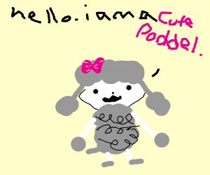 Cute Poddel