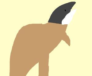 shark with kangaroo body
