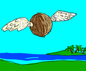 winged coconut