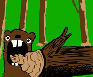 shocked beaver
