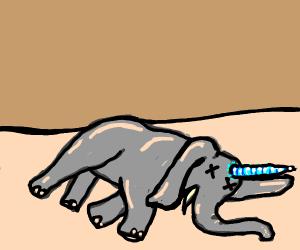 dead elephant with blue horn