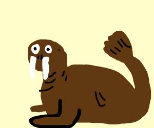 A Walrus