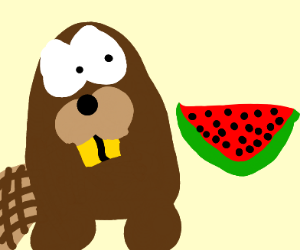 beaver suprised by watermelon