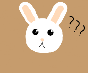 Bunny is confused