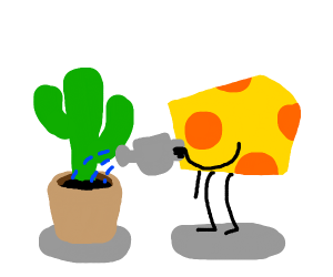 cheese watering a cactus