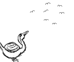 Sad duck watches birds fly away
