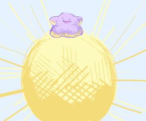 ditto chillin in the sun
