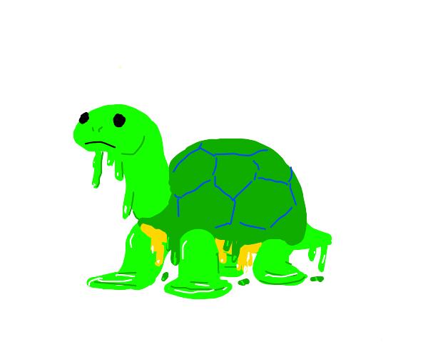 Melting Tortoise
