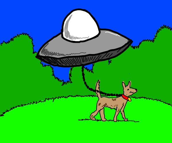 Alien in an UFO takes dog on a walk