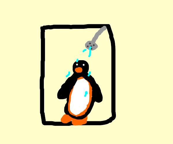 Pingu in the shower