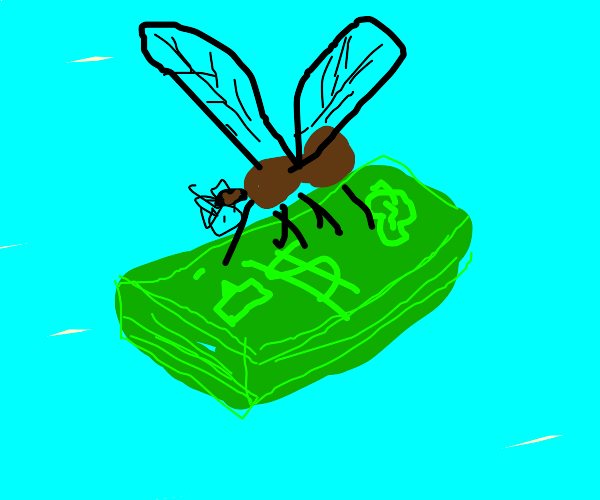 mosquito in love with cash