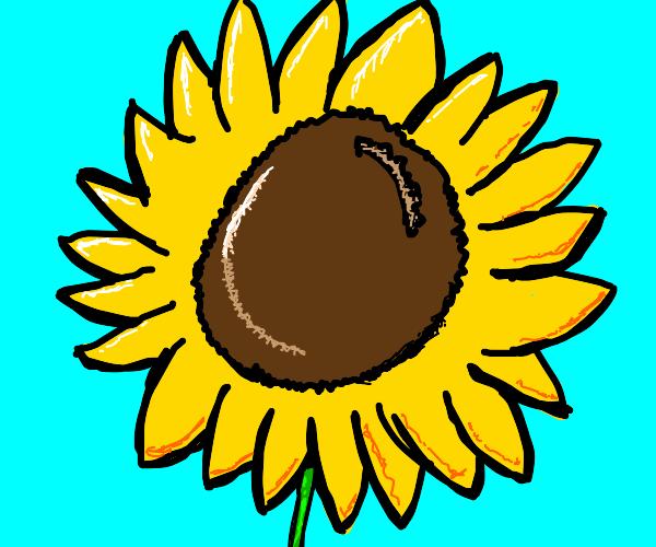 anime sunflower