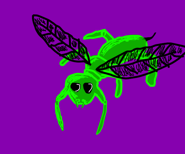 A Green Bug With Black Wings