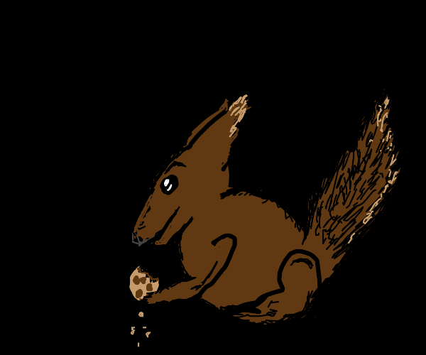 squirrel eating cookie