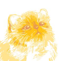 Young kitten
