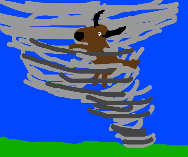 Bull in a tornado