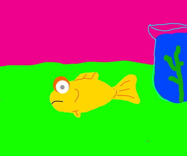 A dead goldfish