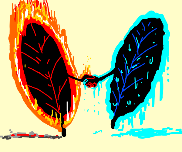 fire leaf and water leaf become friends