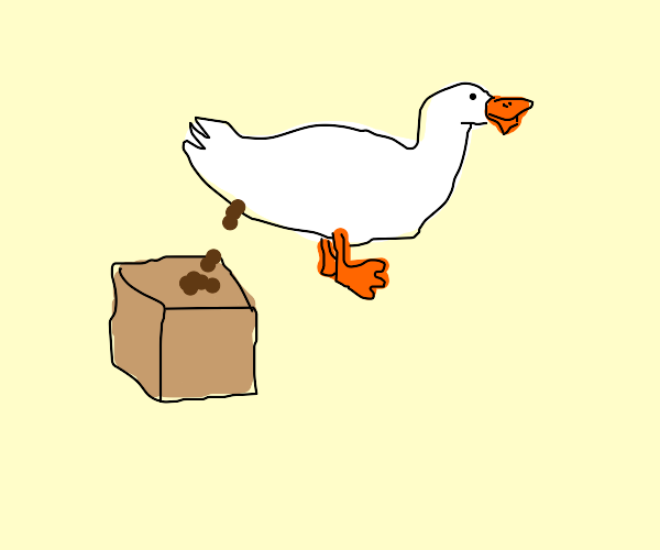 Duck shits on a box
