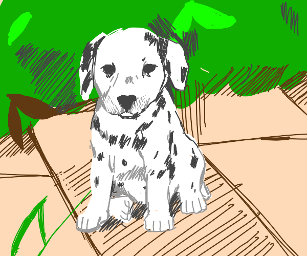 A dalmatian stares at the viewer