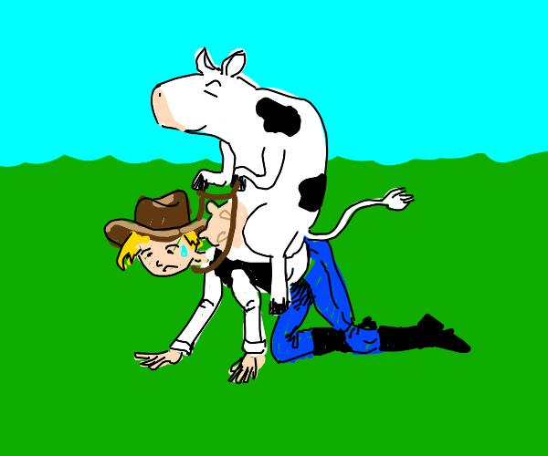 Cow rides cowboy. Giddy up!