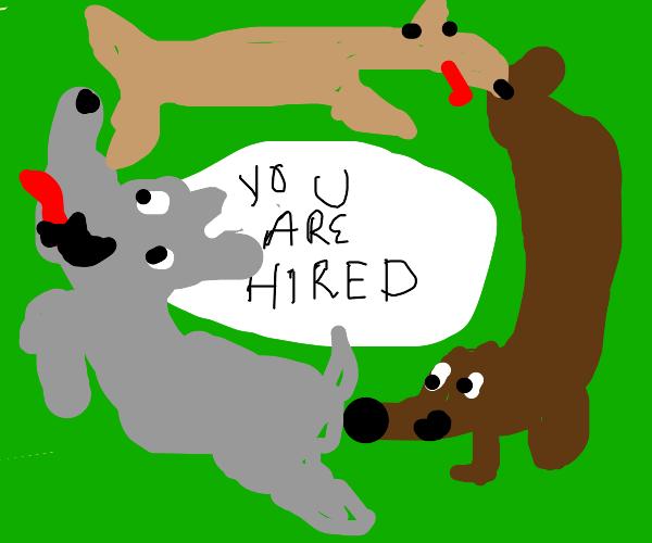 Doggy hiring Circle
