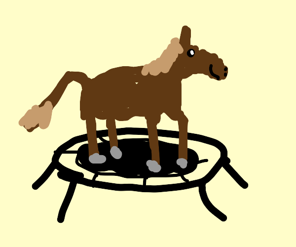 Horse on trampoline