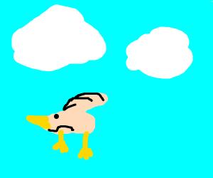Anxiety pigeon