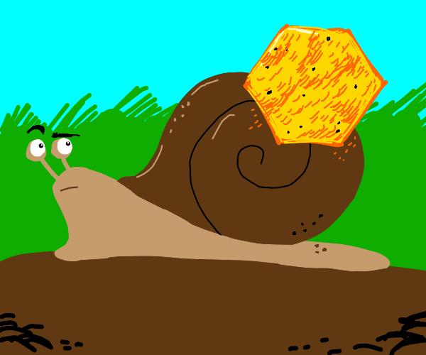 snail with a hexogonal dorito on it back