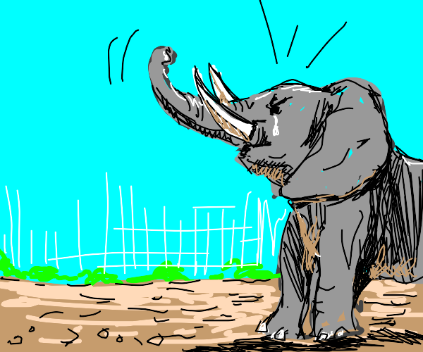 the elephant is angry at the unfair world