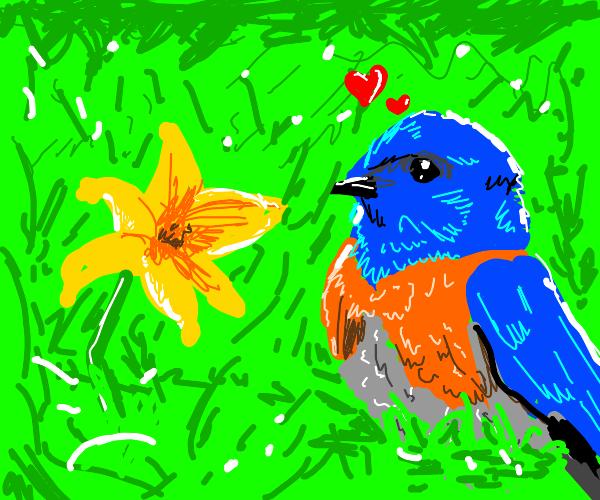 Blue bird finding flower