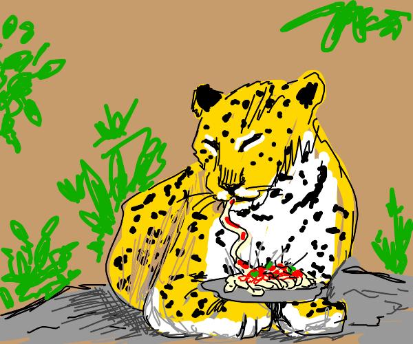 Leopard eating spaghetti