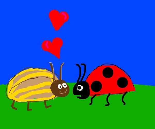 beetle loves a lady bug