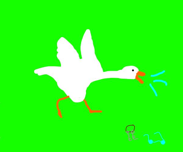goose honk