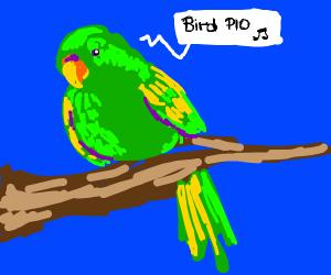 Bird PIO