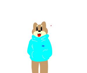 Doggo in blue hoodie