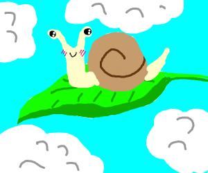 A cute snail